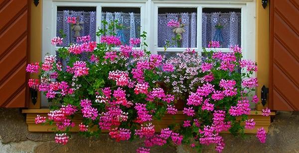 Window-Box-of-Flowers
